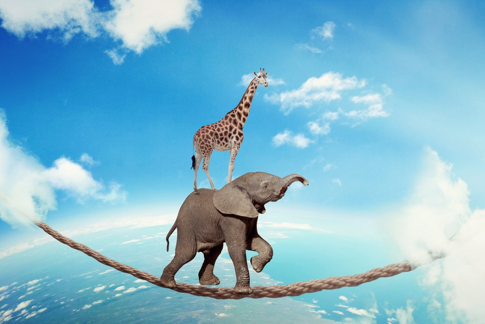 Managing risk business challenges uncertainty concept. Elephant with giraffe walking on dangerous rope high in sky symbol balance overcoming fear for goal success. Young entrepreneur corporate world .jpeg